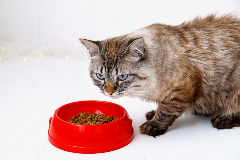 Best Cat Food For Older Cats You Should Not Miss Out 2021
