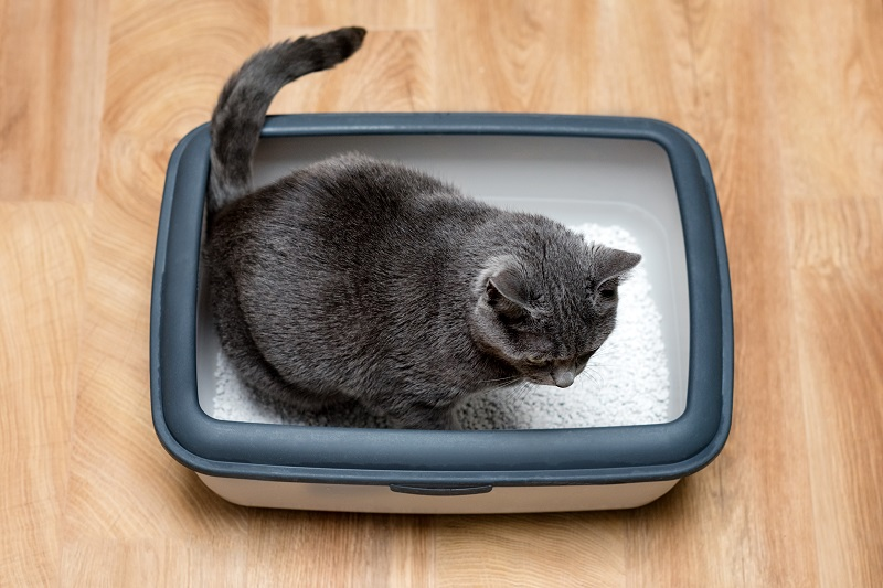 Best self-cleaning litter boxes for your cats