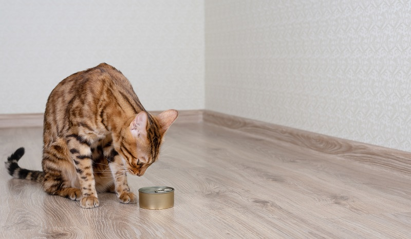 best cat wet food