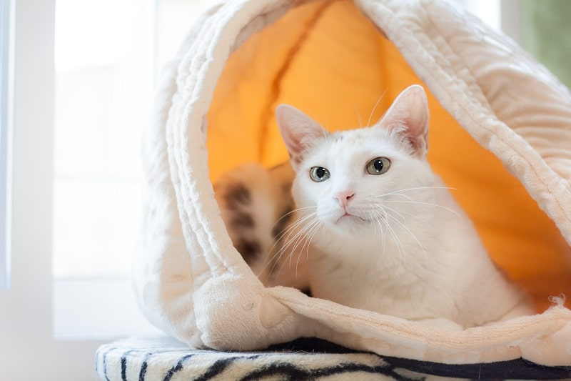 Best Covered Cat Beds
