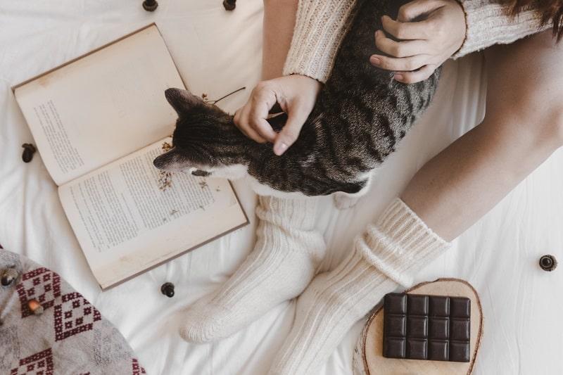 Is Chocolate Bad For Cats
