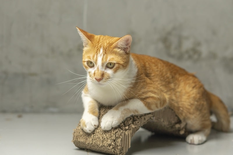 Why do cats need scratching posts