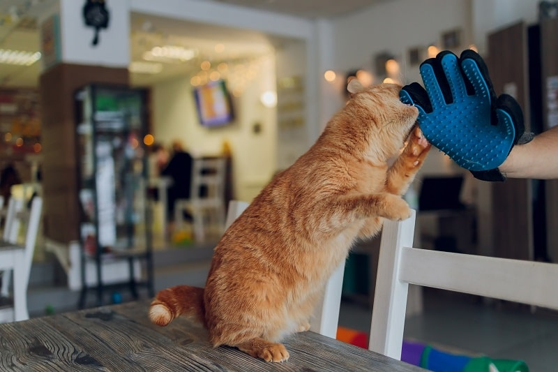 best cat gloves