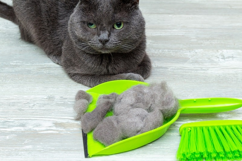 best cat self groomers