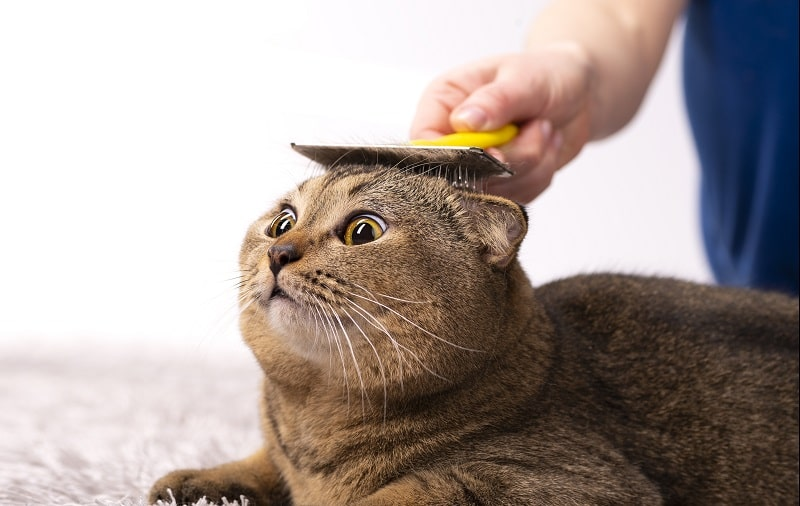 best deshedding brushes for cats