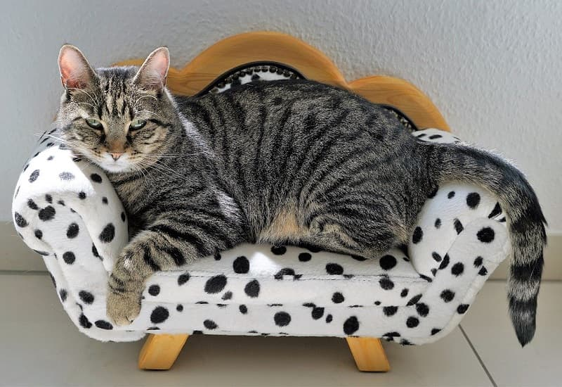 best mini beds for cats