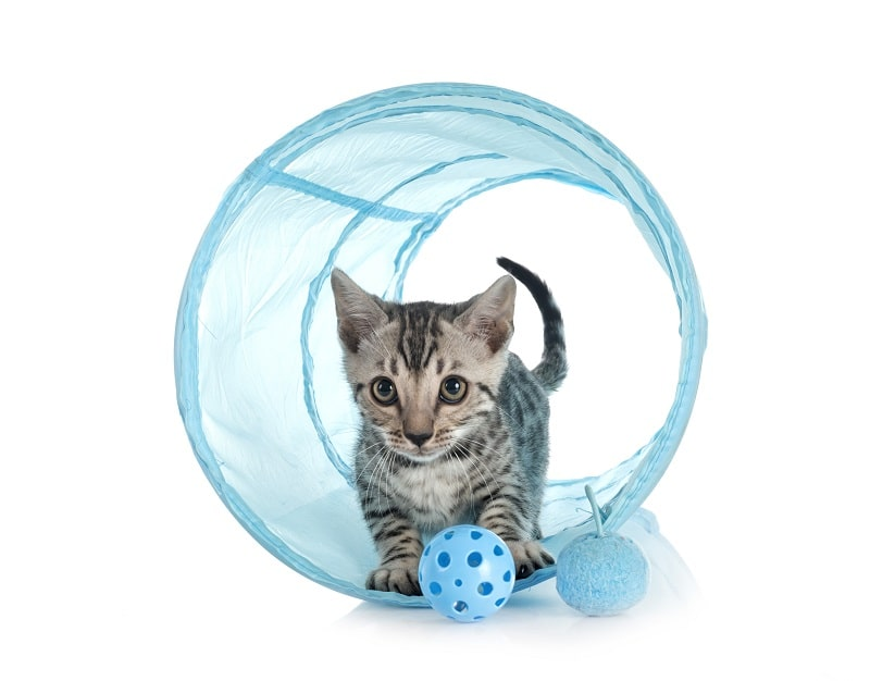 best motion activated cat toys