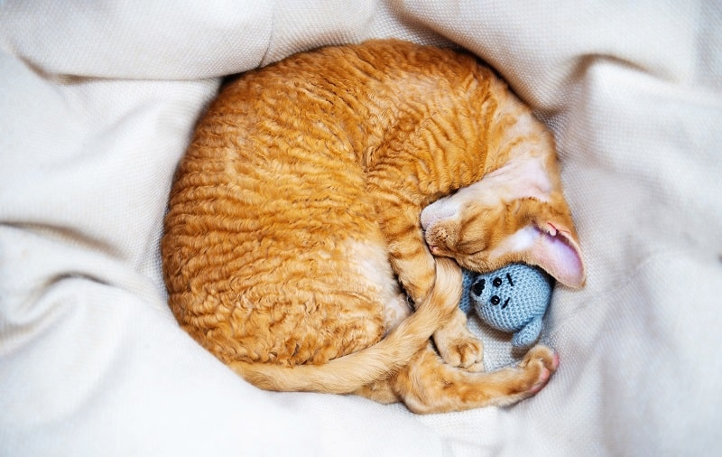 best pop and play cat toys
