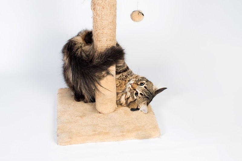 best small cat trees